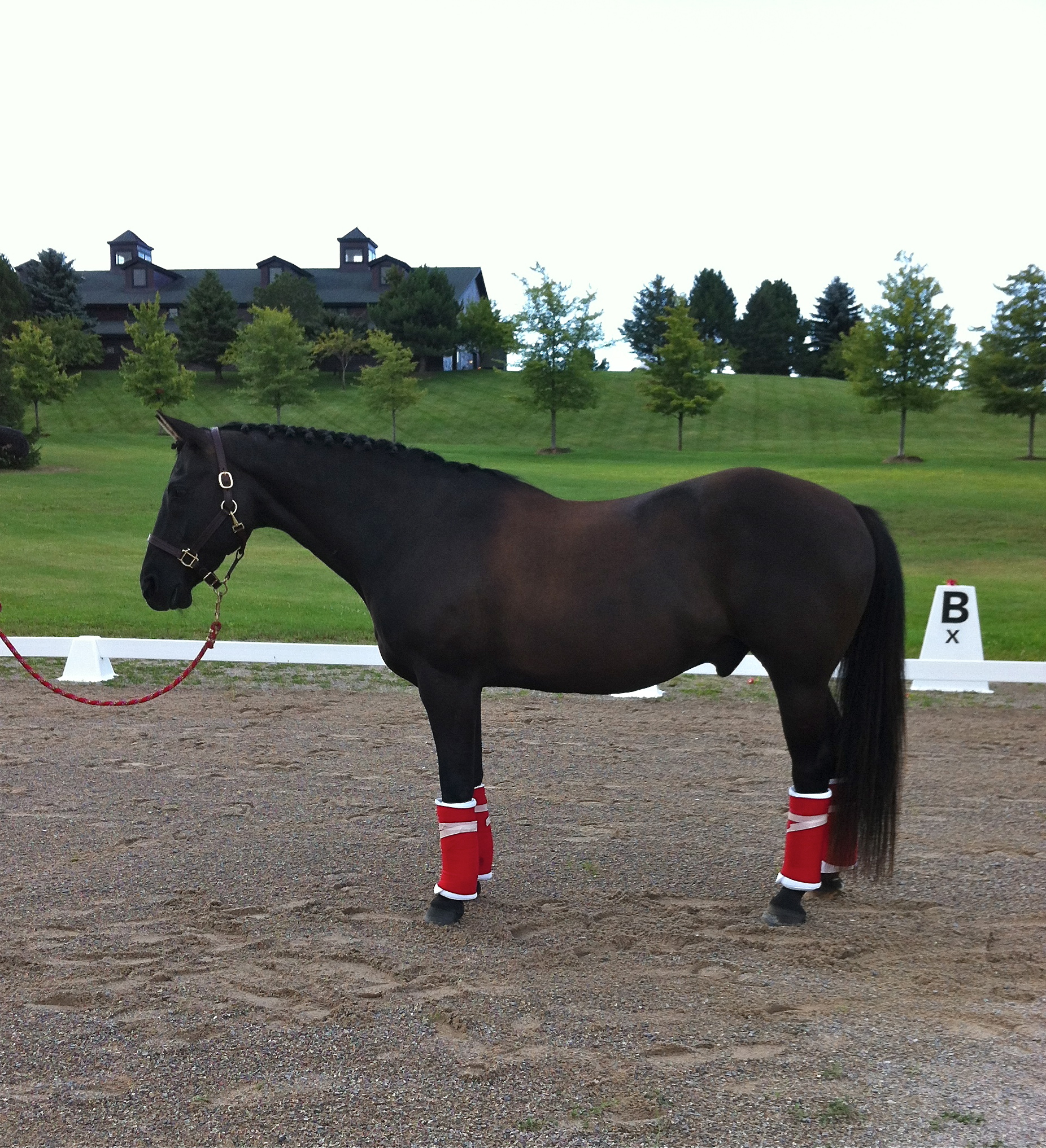 The Black, all round favorite, this summer was this beautiful boy. An aged quarter horse, quiet and willing this horse is for sale by owner. Please contact Brek-n-Ridge for information.