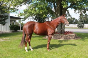This 6 year old mare is the newest addition to our school horse string - reserve her now to fulfill your horse showing dreams!